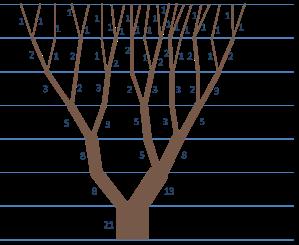 numeros-fibonacci-como-ganhar-na-lotofacil-segredo